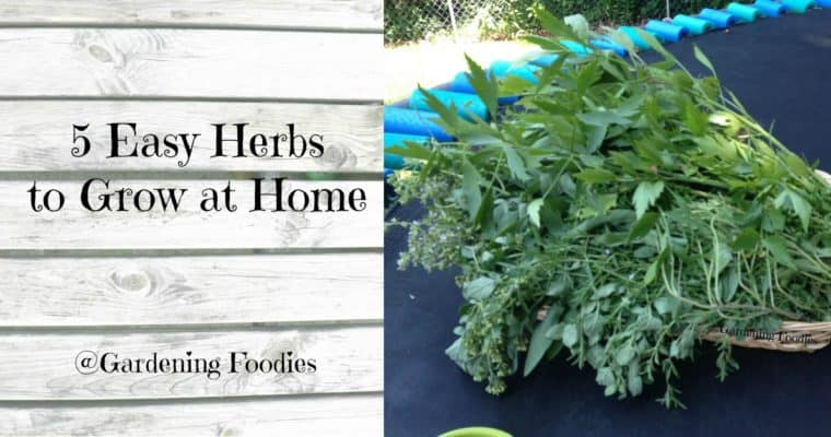 5 Easy Herbs to Grow at Home